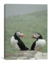 Puffin Therapy!                               , Canvas Print
