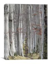 Woods for the Trees                               , Canvas Print