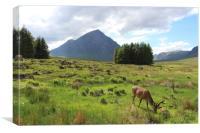 The herdsman of Etive Buachaille Etive Mor Glencoe, Canvas Print