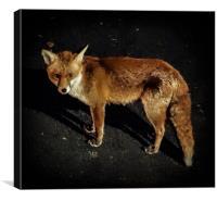 Red Fox Portrait, Canvas Print
