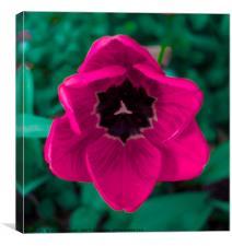 Bubblegum Tulip, Canvas Print