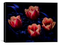 Fire Tulips, Canvas Print