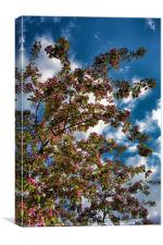 Cheery Cherry Blossom Tree, Canvas Print