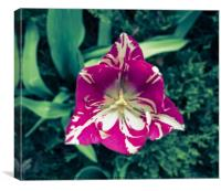 Trippy Tulip, Canvas Print