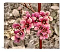 Pretty In Pink, Canvas Print