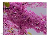 Pink Tree Blossom, Canvas Print
