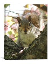 Grey Squirrel Portrait, Canvas Print