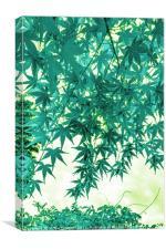 Raining Maple, Canvas Print