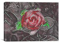 Shadow of a Rose, Canvas Print