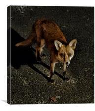 Feisty Fox, Canvas Print