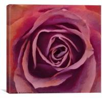 Rose Pose, Canvas Print