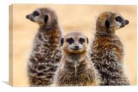 Meerkats on Patrol, Canvas Print