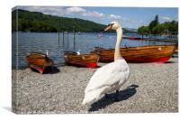 Swan at Bowness-on-Windermere, Canvas Print