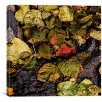 Alder Leaves, Canvas Print