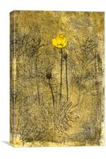 Yellow Poppy and Horsetail, Canvas Print