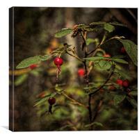 Wild Rosehips, Canvas Print