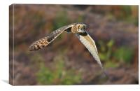Short-eared Owl, Canvas Print