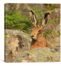 Watching me, Watching you.......Brown Hare, Canvas Print