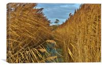 Reeds, Rhyne and Lonesome Pine        , Canvas Print