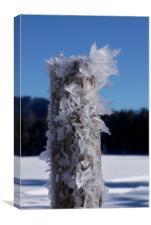 Frosty Alpine Pole                                , Canvas Print
