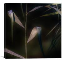 Dewdrops at Dawn, Canvas Print