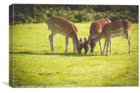 Trio of Fallow Deer, Canvas Print