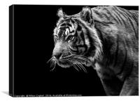 Tiger 1 - Black Series, Canvas Print