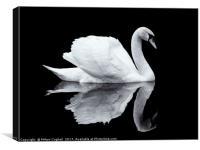 Swan 1 - Black Series, Canvas Print