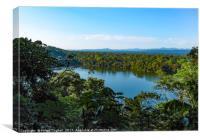Amazon Rainforest, Canvas Print