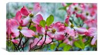 Pink & White Blossoms in Spring, Canvas Print