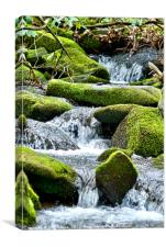 Cool Mountain Stream in Spring, Canvas Print