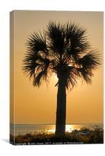 Palm Tree Sunset, Canvas Print