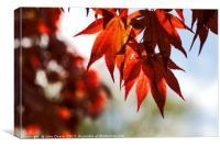 Japanese Maple Tree Leaves, Canvas Print