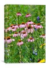 Echinacea With Honey Bees, Canvas Print