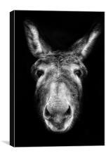 Donkey, Canvas Print