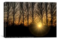 Sunset through trees, Canvas Print