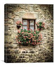 Geraniums around a cottage window, Canvas Print