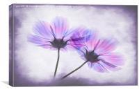 Transparent Purple Petals, Canvas Print