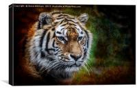 Tiger Portrait., Canvas Print