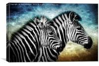 Zebra Portrait., Canvas Print
