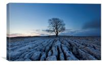 Malham Lone Tree, Canvas Print