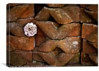 Flower Among the Bricks, Canvas Print