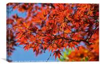 Japanese Red Maple, Canvas Print