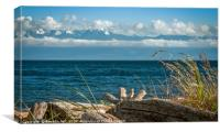 Driftwood by the Salish Sea, Canvas Print