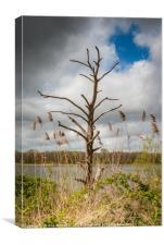 Skeleton Tree Rollesby Broad Norfolk, Canvas Print