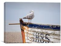 Looking out for fish - Herring Gull on a derelict