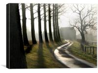 Tree Shadows on the Lane  North Norfolk, Canvas Print