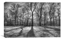 Belfairs Woods, Canvas Print