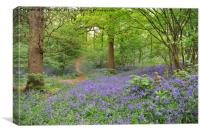 Bluebells in Langdon Hills                        , Canvas Print