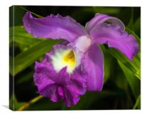 Purple Iris flower, Canvas Print